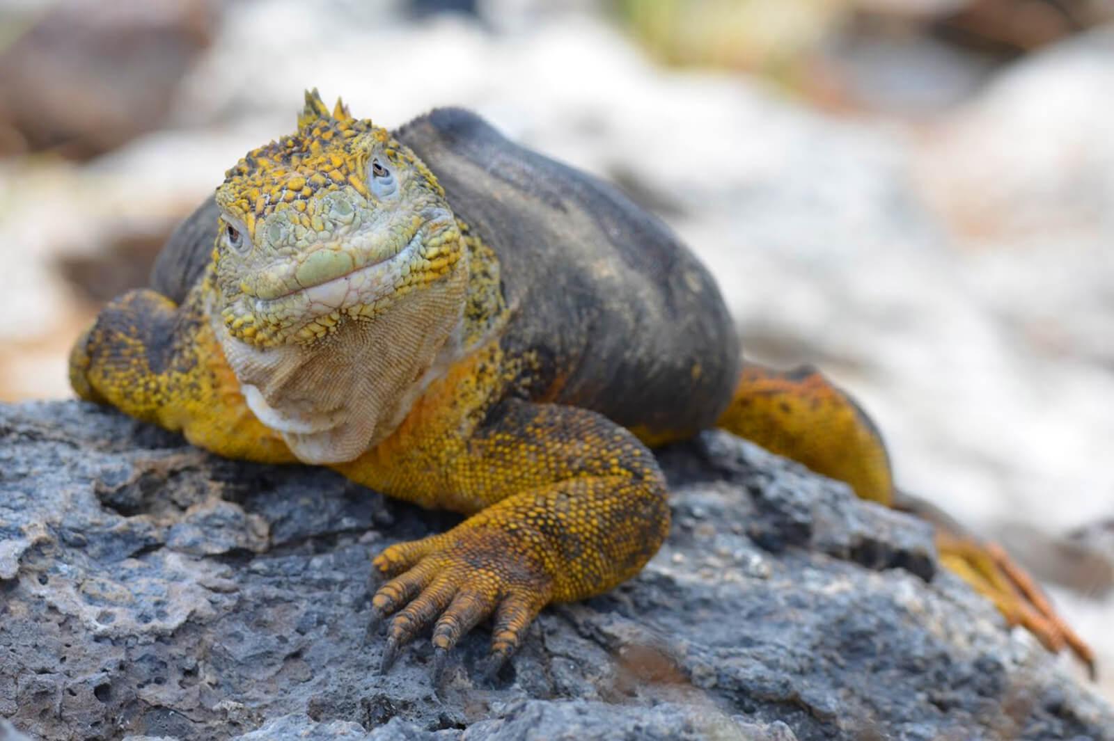 equateur-galapagos-cgm