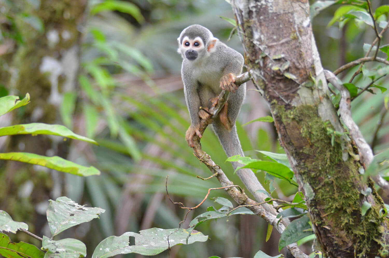 equateur-amazonie-faune-cgm