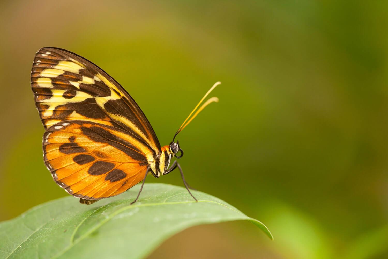 observation-papillons-foret-equateur-c-sacha-lodge