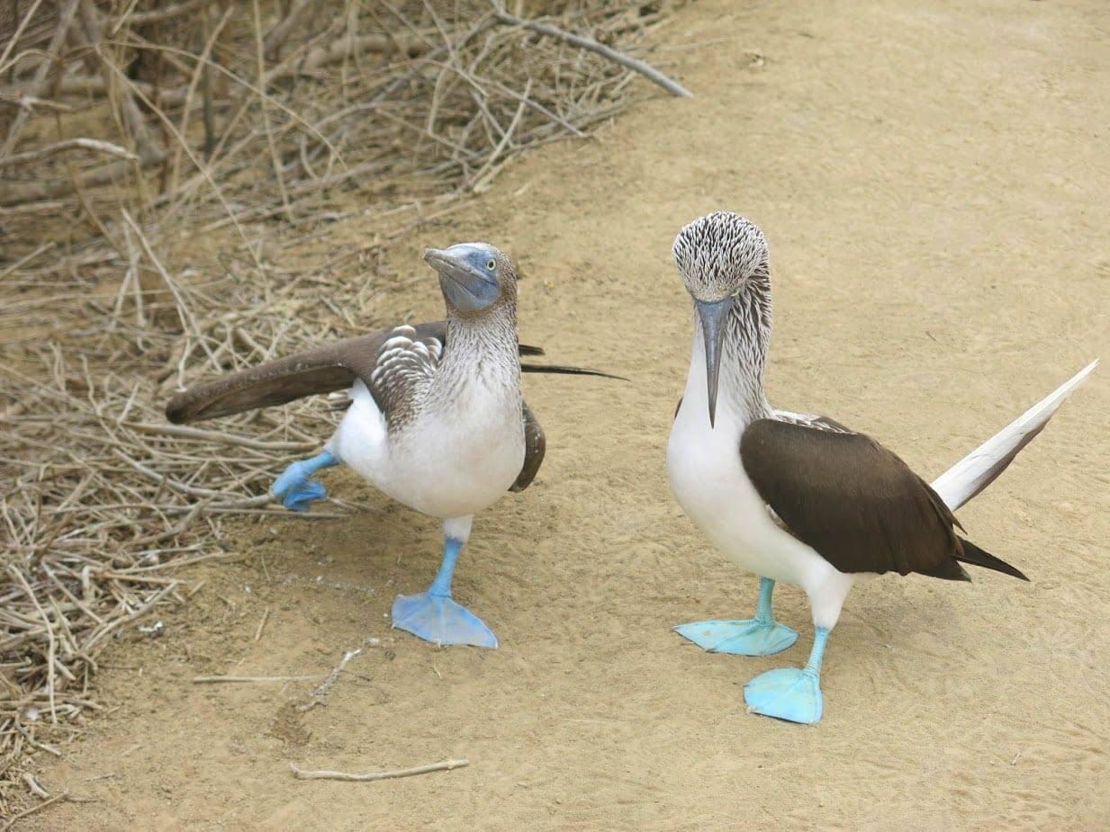 parc-machilla-equateur-oiseaux