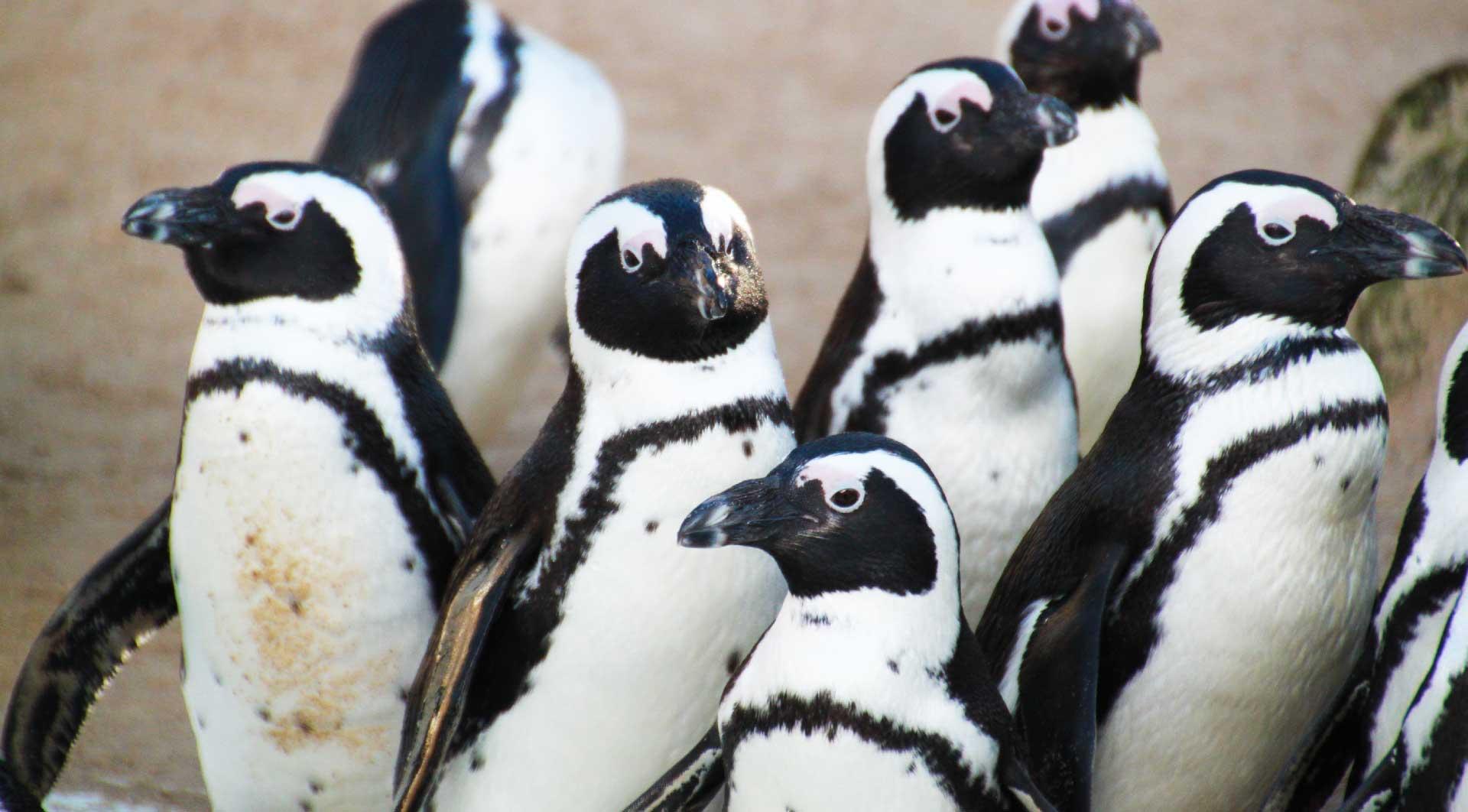 penguins-352080-web