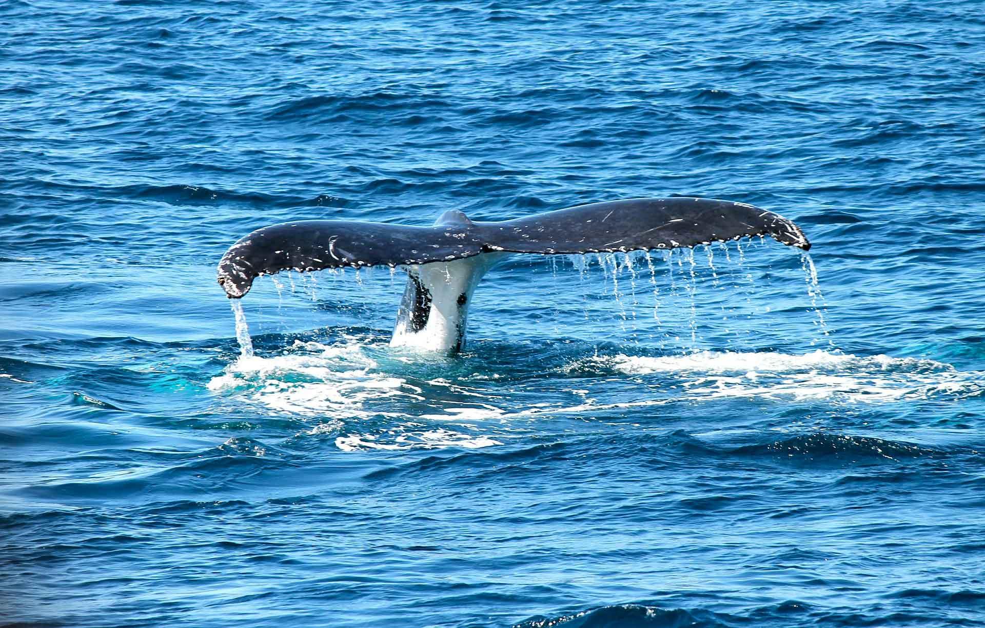 whale-367233_1920-web